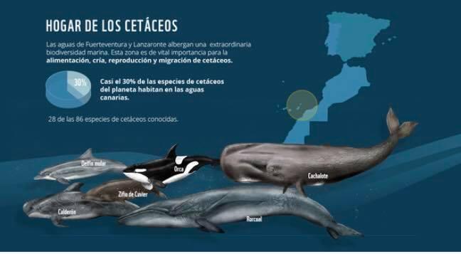 Hogar de los cetáceos